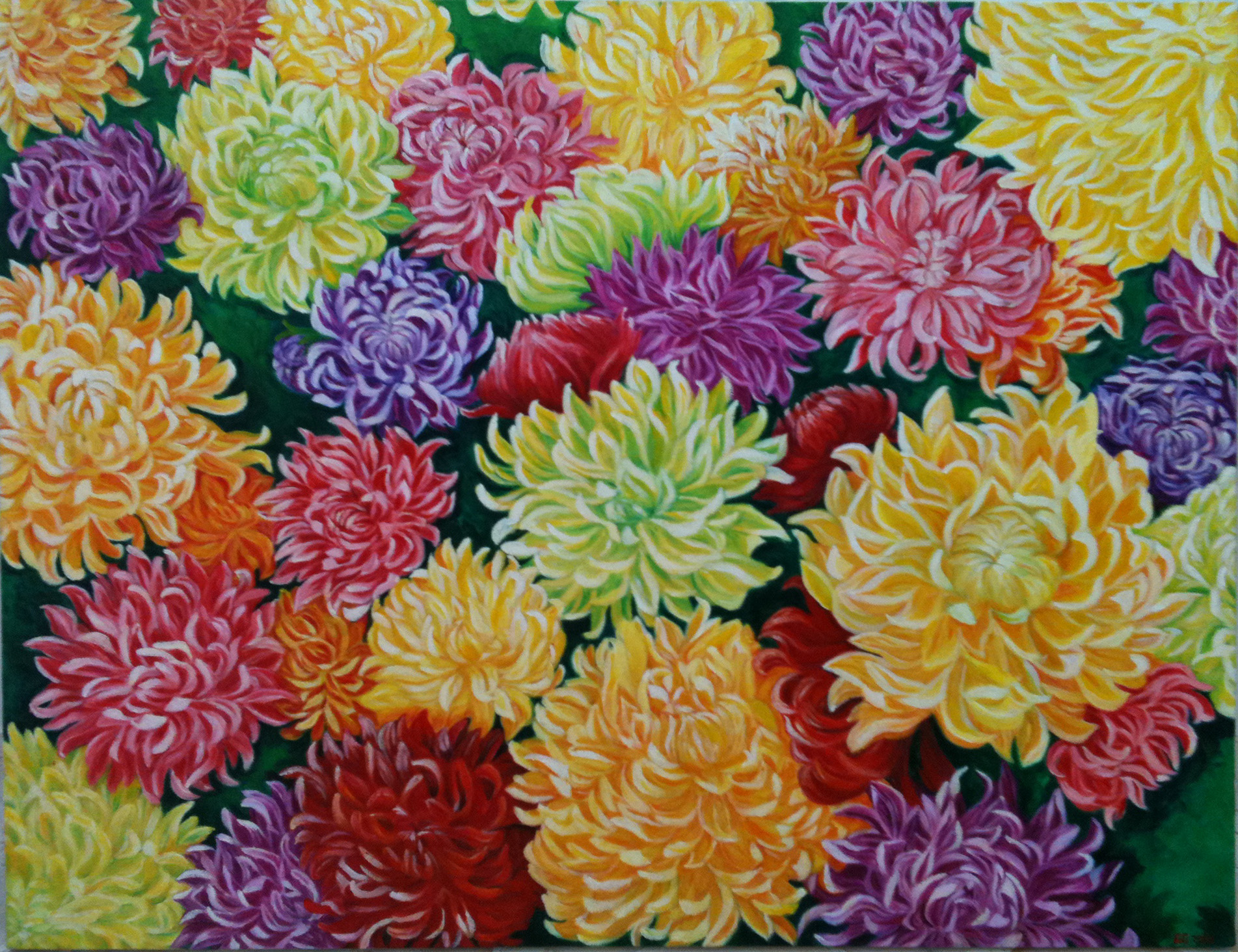 Colourful Chrysanthemums For Mom